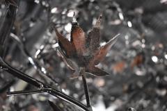 Tree Sculpture Leaf Detail