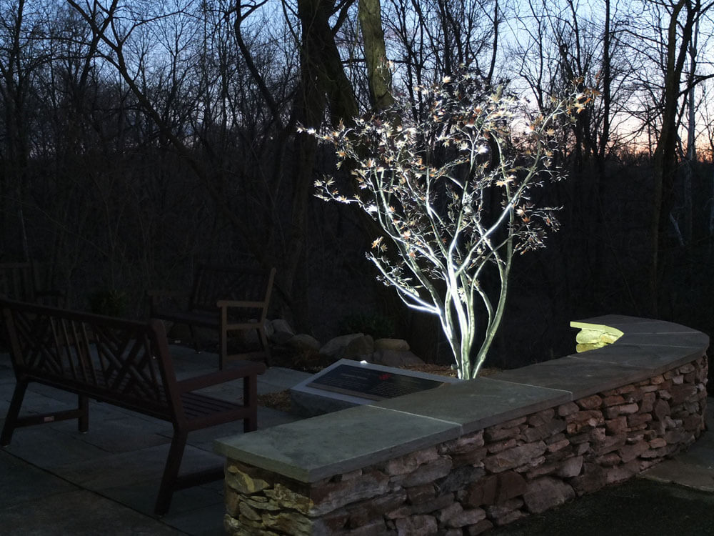 Exterior Japanese Maple Tree with Artificial Lighting